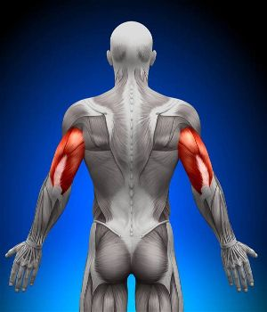 Tricep basics you should know first