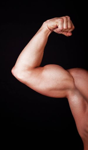 Basic informations about bicep muscles